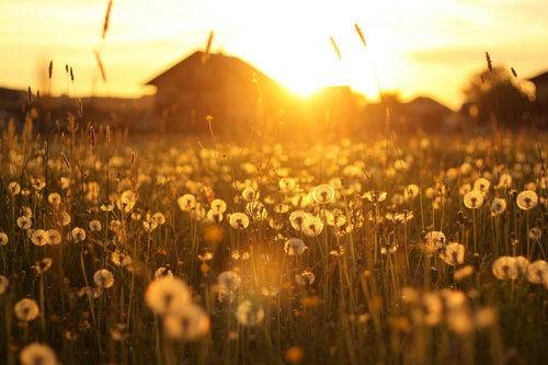 flors i sol